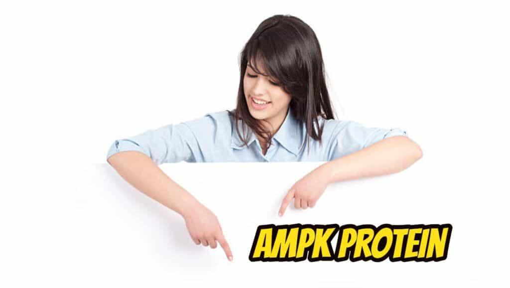 AMPK Protein